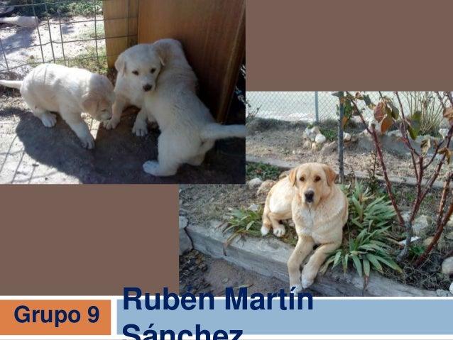 Rubén MartínGrupo 9