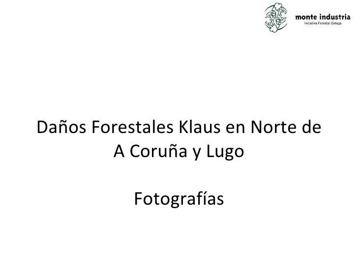 Daños Forestales Klaus en Norte de A Coruña y Lugo Fotografías