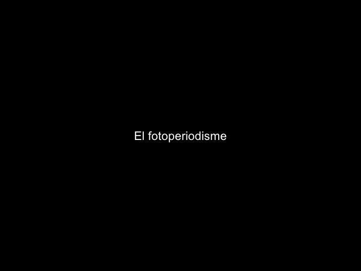 El fotoperiodisme
