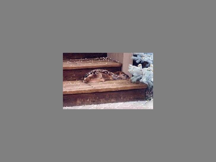 Fotos  Curiosas  Animais Portaldarte Slide 17