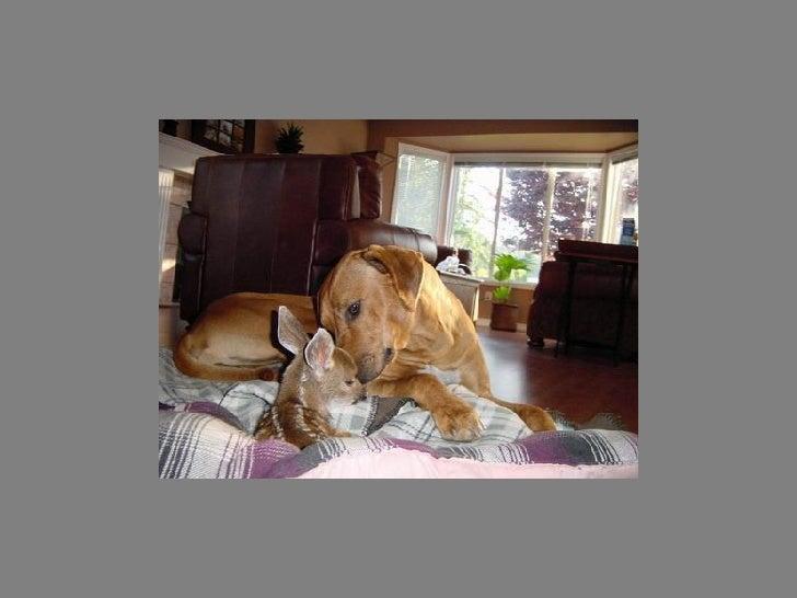 Fotos  Curiosas  Animais Portaldarte Slide 19