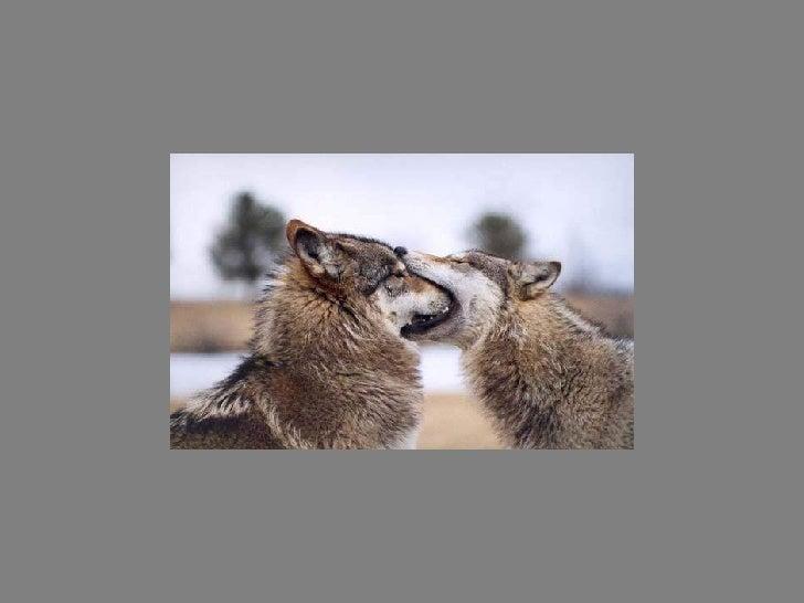 Fotos  Curiosas  Animais Portaldarte Slide 2
