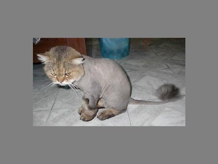 Fotos  Curiosas  Animais Portaldarte Slide 22
