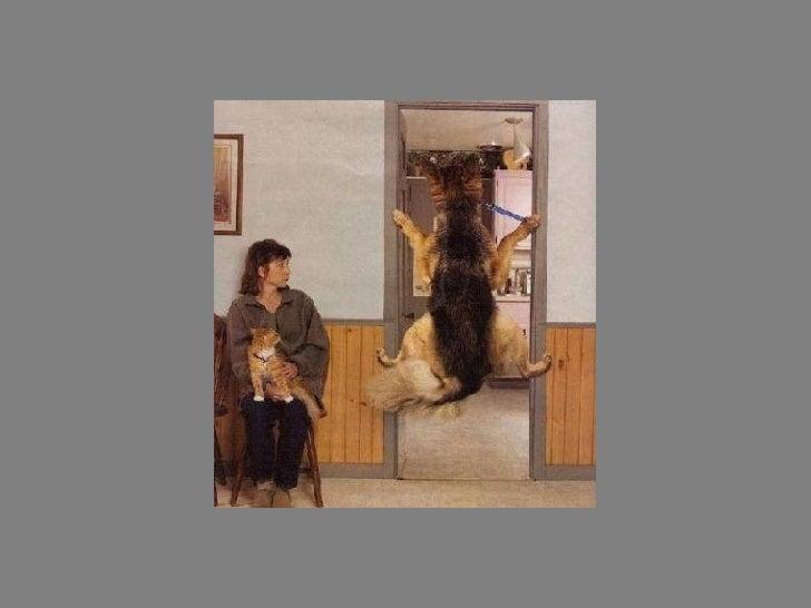 Fotos  Curiosas  Animais Portaldarte Slide 24