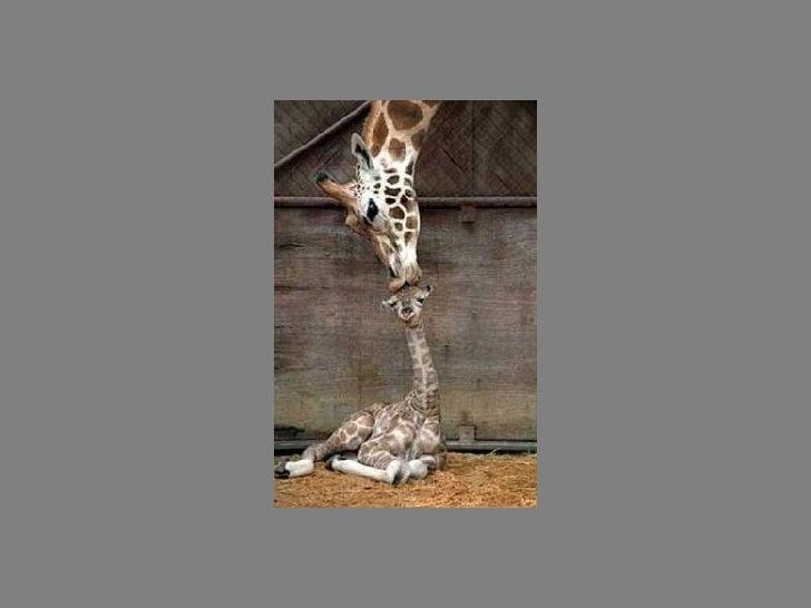 Fotos  Curiosas  Animais Portaldarte Slide 26