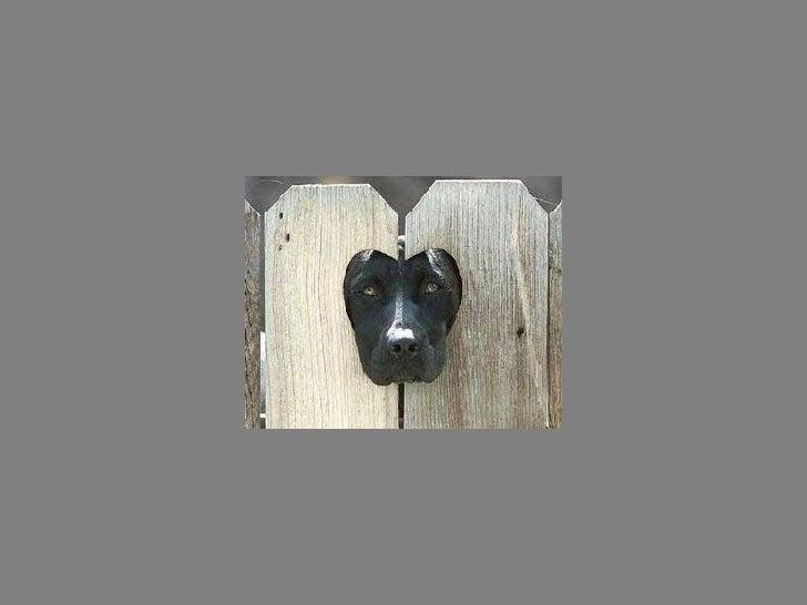 Fotos  Curiosas  Animais Portaldarte Slide 29