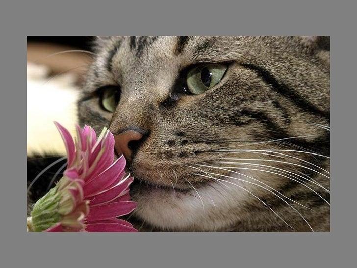 Fotos  Curiosas  Animais Portaldarte Slide 3