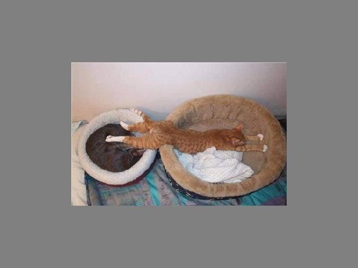 Fotos  Curiosas  Animais Portaldarte Slide 30