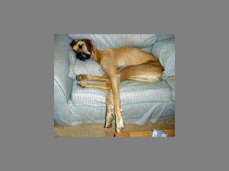 Fotos  Curiosas  Animais Portaldarte Slide 31