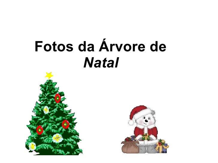 Fotos da Árvore de  Natal