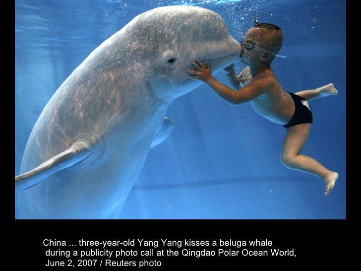 China ... three-year-old Yang Yang kisses a beluga whale during a publicity photo call at the Qingdao Polar Ocean World, J...