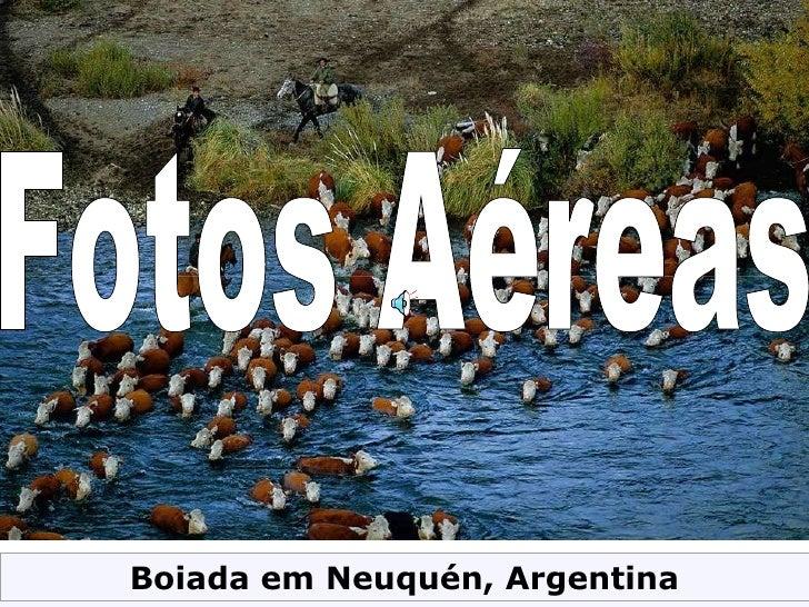 Fotos Aéreas Boiada em Neuquén, Argentina