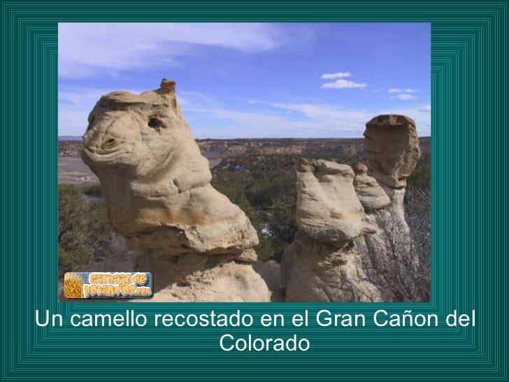 <ul><li>Un camello recostado en el Gran Cañon del Colorado </li></ul>