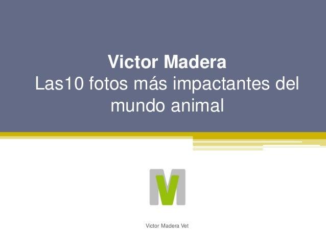 Victor Madera Las10 fotos m�s impactantes del mundo animal Victor Madera Vet