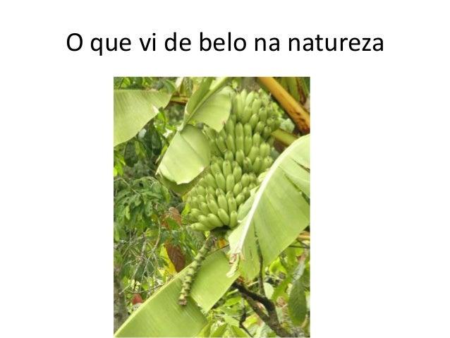 O que vi de belo na natureza