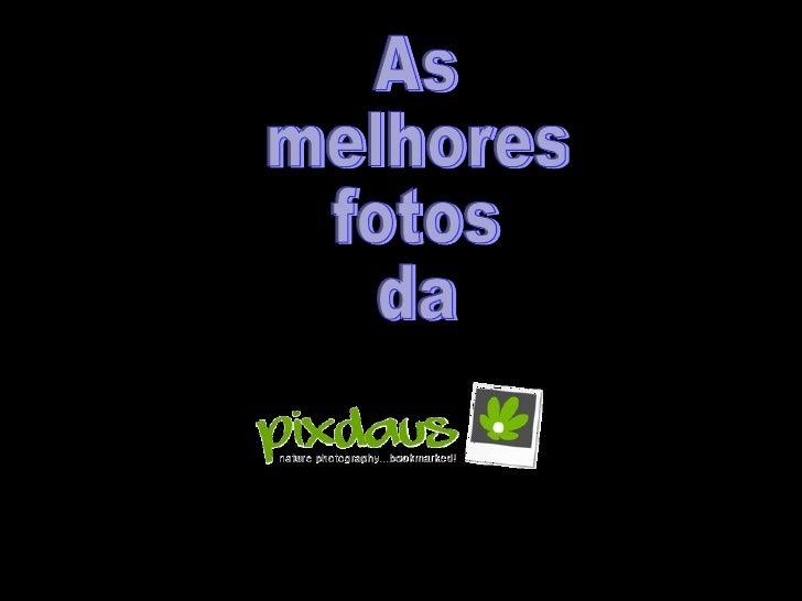 Fotos da pixdaus