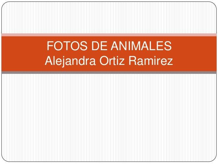 FOTOS DE ANIMALESAlejandra Ortiz Ramirez<br />