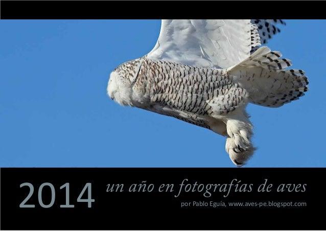 2014 un año en fotografías de aves por Pablo Eguía, www.aves-pe.blogspot.com