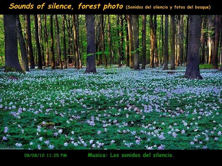 08/08/10   11:10 PM   Musica: Los sonidos del silencio.  Sounds of silence, forest photo  (Sonidos del silencio y fotos de...