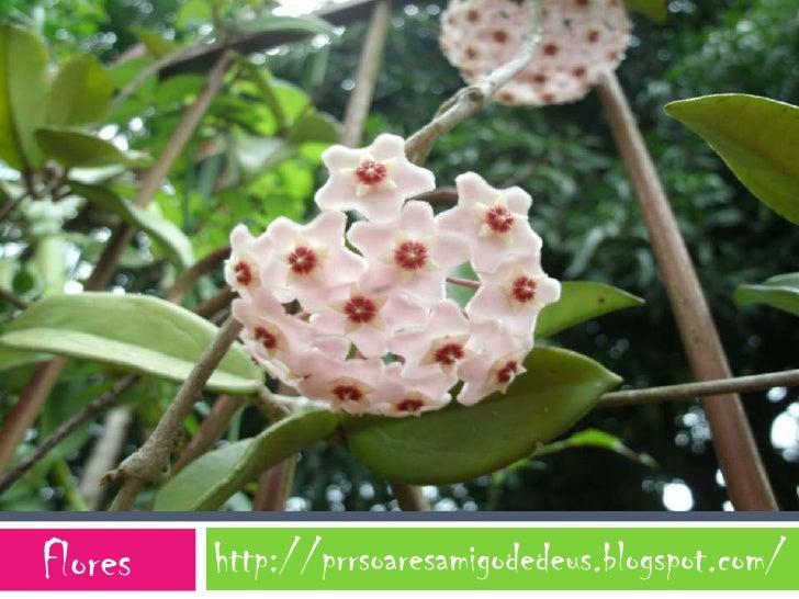 Flores   http://prrsoaresamigodedeus.blogspot.com/