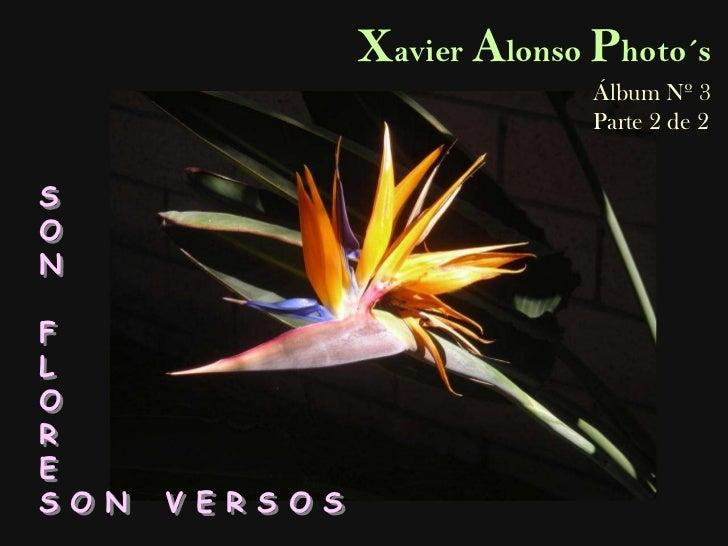 Xavier Alonso Photo´s<br />Álbum Nº 3<br />Parte 2 de 2<br />S<br />O<br />N<br />F<br />L<br />O<br />R<br />E<br />S O N...