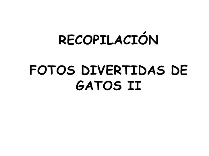 RECOPILACIÓN   FOTOS DIVERTIDAS DE GATOS II