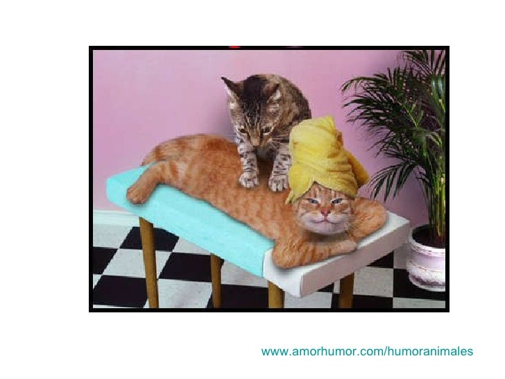 www.amorhumor.com / humoranimales