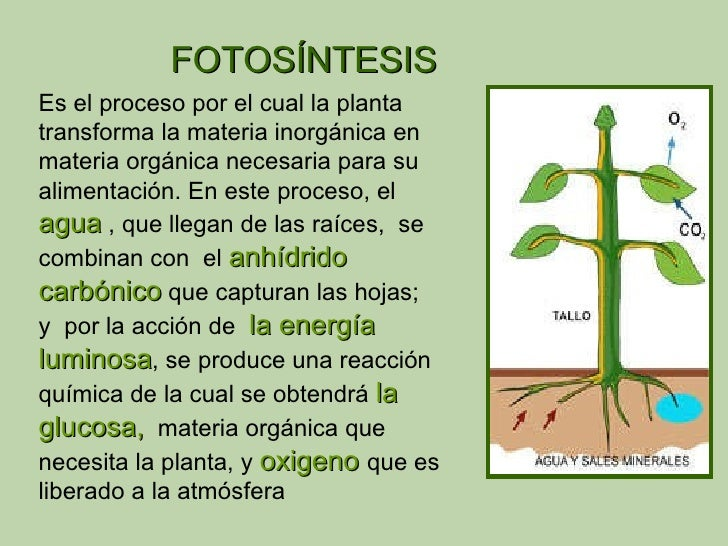Descripcion del proceso de la fotosintesis 3