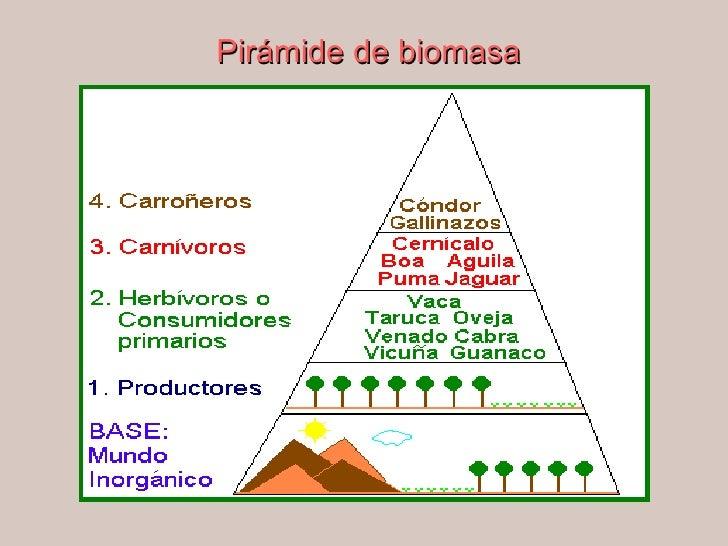 Elementos intervienen fotosintesis wikipedia