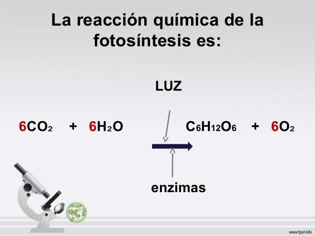 Fotosintesis for La quimica en la gastronomia