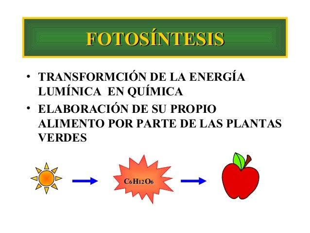 FOTOSÍNTESIS • TRANSFORMCIÓN DE LA ENERGÍA LUMÍNICA EN QUÍMICA • ELABORACIÓN DE SU PROPIO ALIMENTO POR PARTE DE LAS PLANTA...