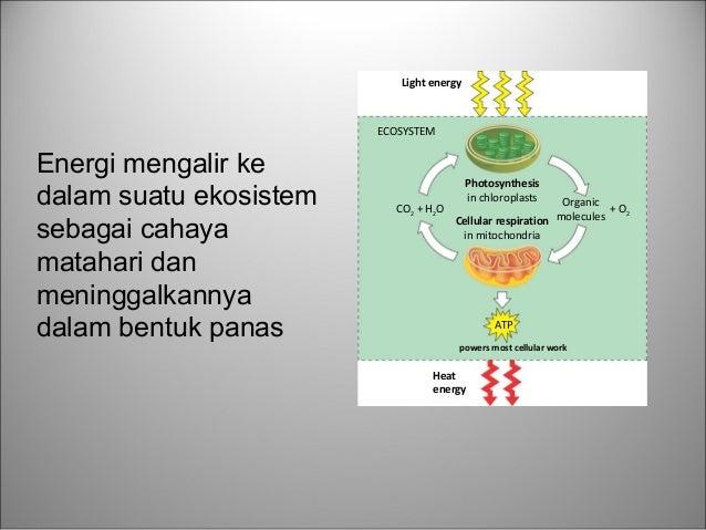 biologi tentang Fotosintesis