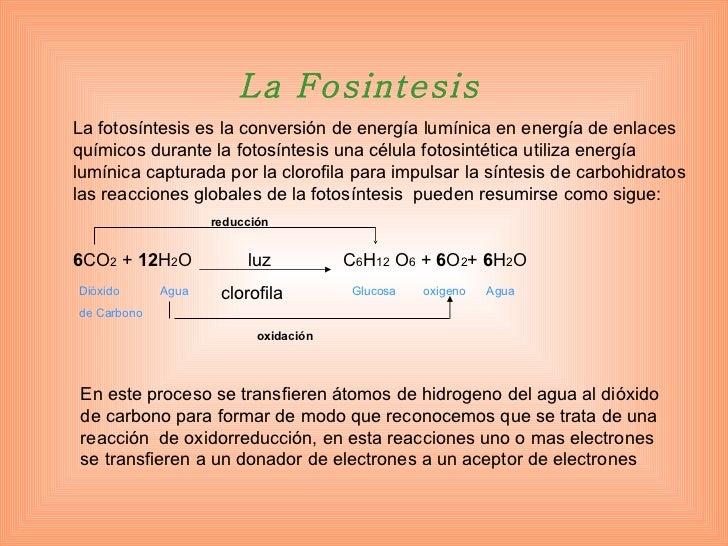 La fotosíntesis es la conversión de energía lumínica en energía de enlaces químicos durante la fotosíntesis una célula fot...