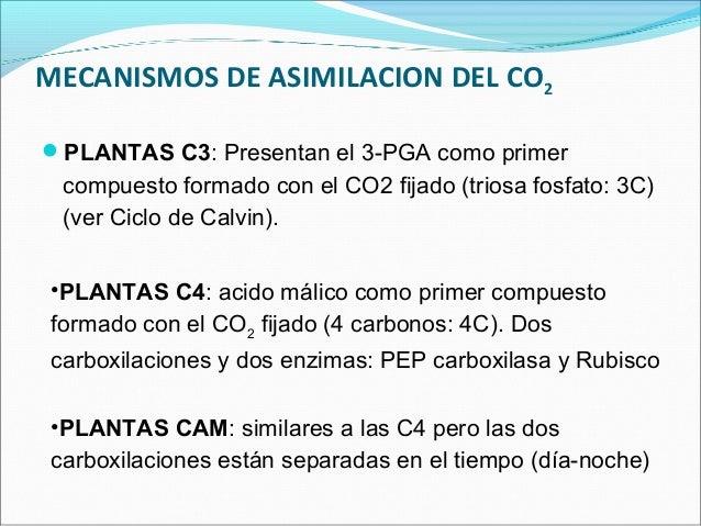 bf5e33e802 Fotosintesis c3 c4 y cam ppt
