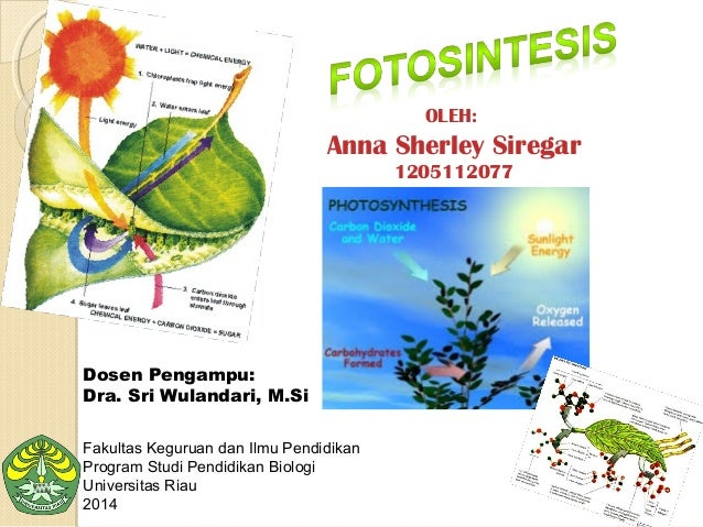 Fotosintesis Anna Sherley