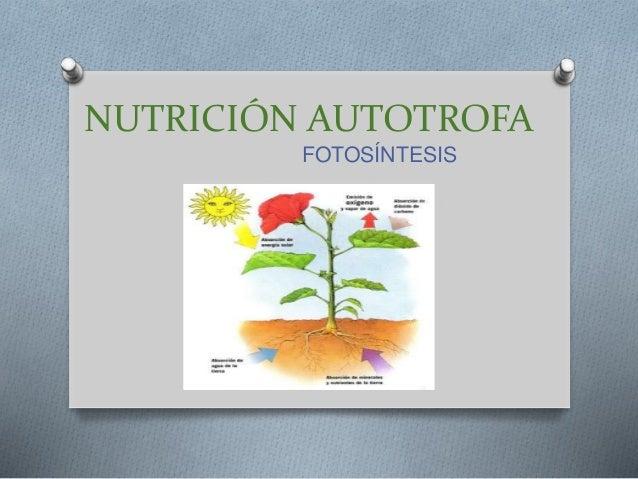 NUTRICIÓN AUTOTROFA FOTOSÍNTESIS
