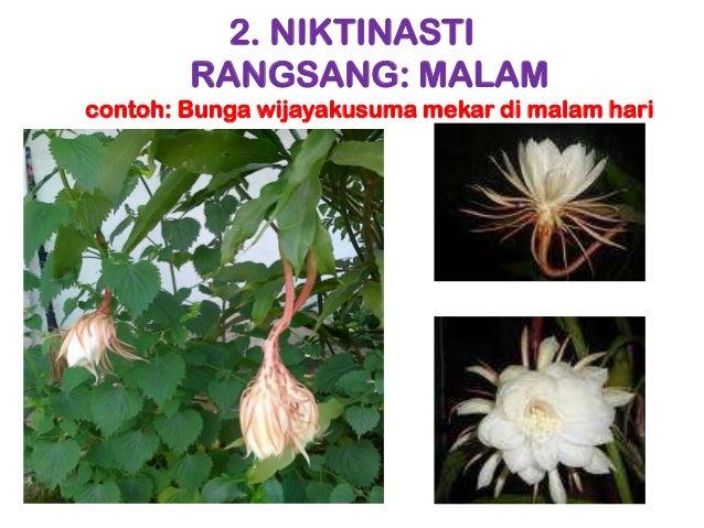 Hasil gambar untuk gerak nasti pada tumbuhan