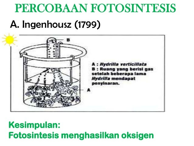 Fotosintesis Gerak Tumbuhan