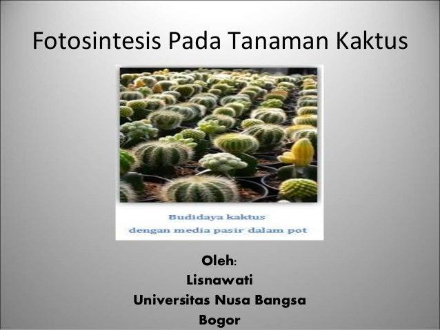 Kaktus melakukan fotosintesis pada organ