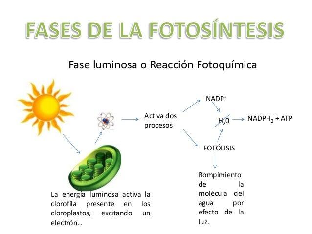 Ecuacion de la fotosintesis y respiracion celular