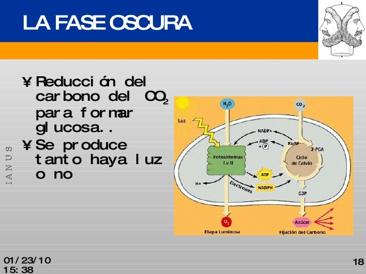 FASE OSCURA DOWNLOAD