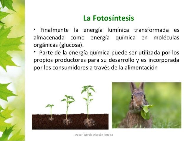 PPT de Fotosíntesis para 1° de enseñanza media