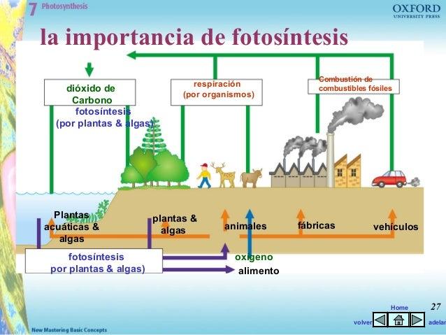 Respiracion De Las Plantas Gif: Fotosíntesis Entretenida (animada
