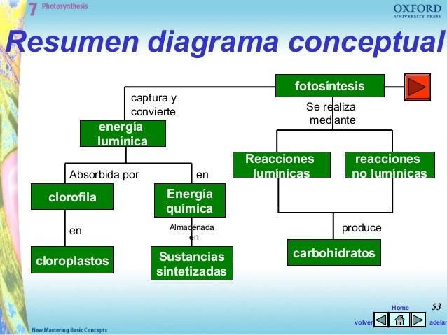 ciclos anabolicos de volumen