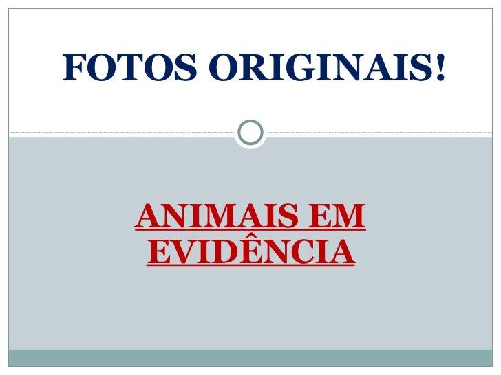 ANIMAIS EM EVIDÊNCIA FOTOS ORIGINAIS!