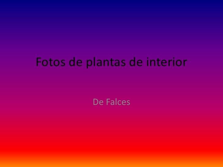Fotos de plantas de interior<br />De Falces<br />