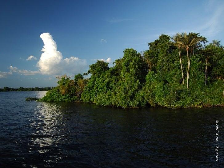 © WWF-Brasil / Zig Koch
