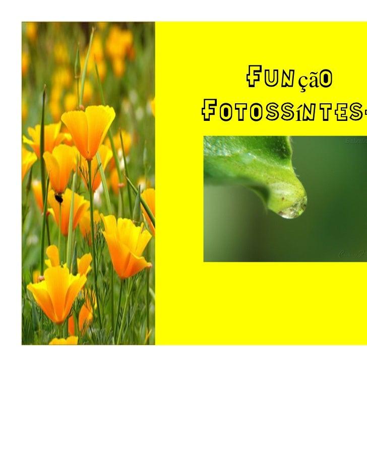 FunçãoFotossíntese