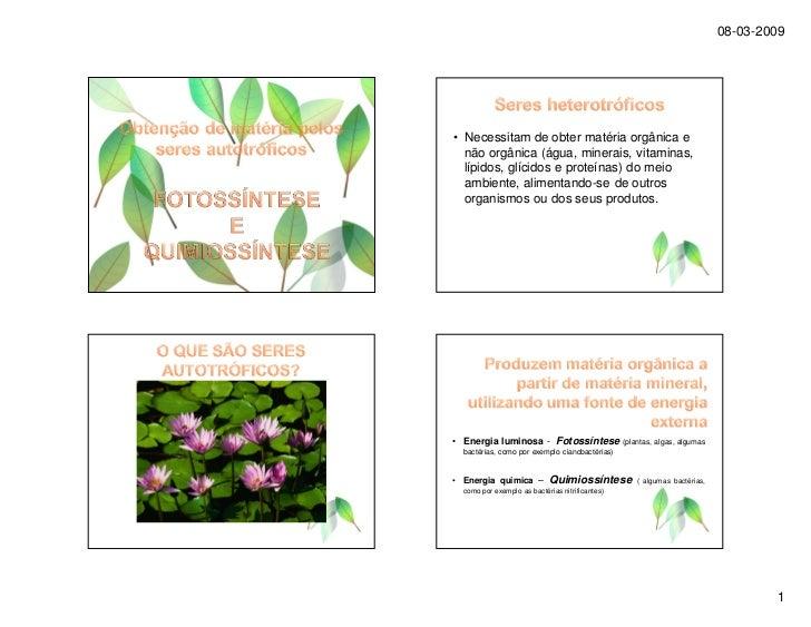08-03-2009     • Necessitam de obter matéria orgânica e   não orgânica (água, minerais, vitaminas,   lípidos, glícidos e p...