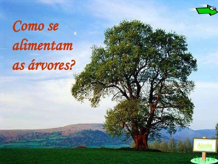 Como se alimentam as árvores?                  Ajuda